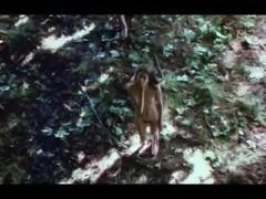 Post apocalyptic Adam & Eve (1971)